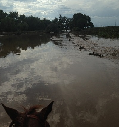 There were no adoring fans screaming or bright lights, just rushing flood waters and horses in need when KodyLostroh saddled up in the 2013 Colorado flood.