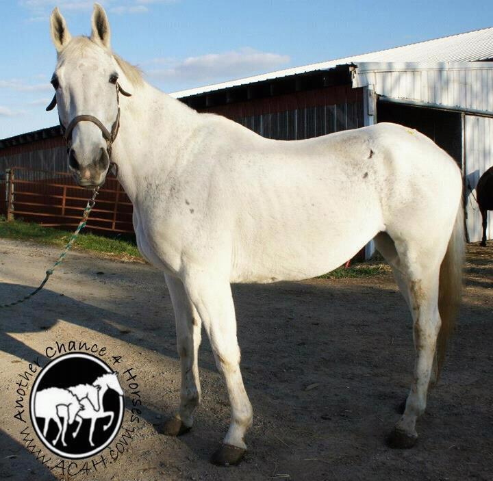 PA Boarding Stable Owner Not Guilty of Horse Cruelty | Horse Authority