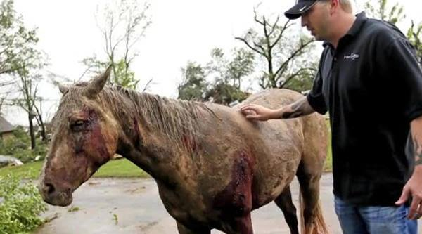 Oklahoma hurricane ravages horses along with everything else.