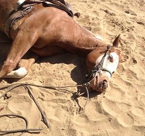 Martha Torkington's reining horse
