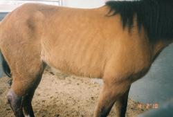"Utah farrier and self-professed ""horse-whisperer"" Troy Mortensen returned Valiant to his owner gravely injured. The horse's death landed them on Judge Joe Brown's TV show."