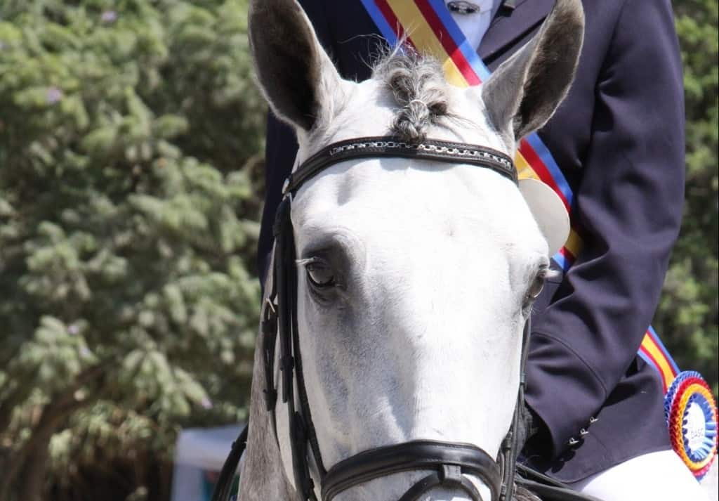 volunteer steals from St. Clements horse show NY