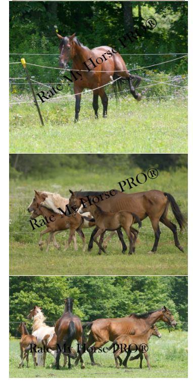 Leland Neff horse herd