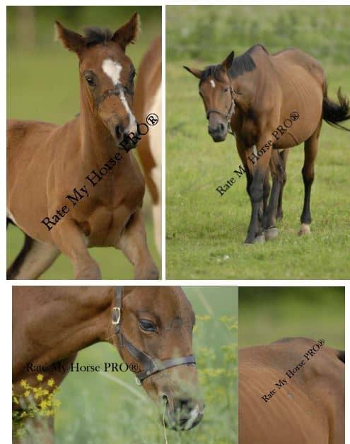 Leland Neff horses