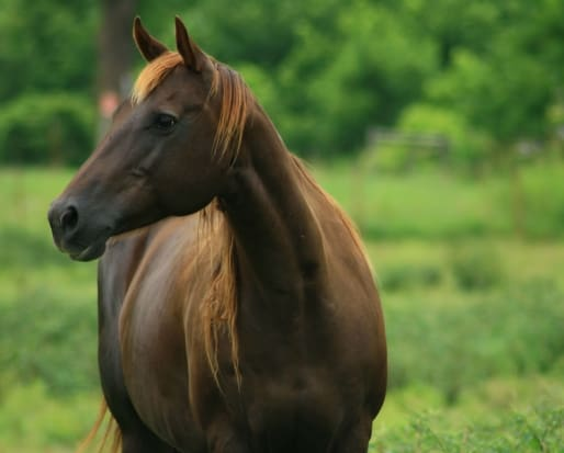 Plaintiffs: AQHA Cloned Horse Ban is Abuse of Monopoly