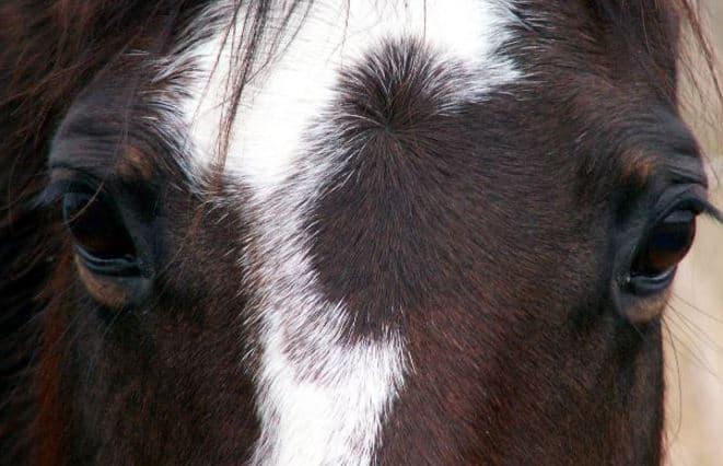 Carol Dobbelaire Animal Cruelty