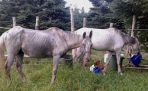July 2013 photo of Wicka and Trinity