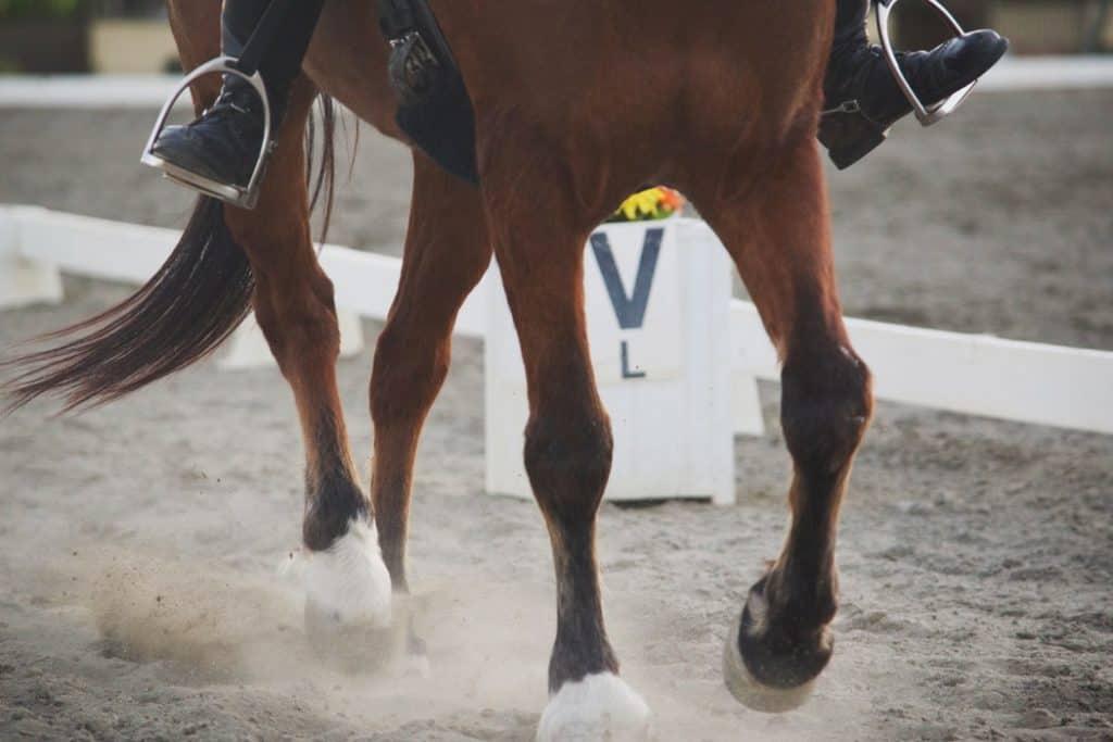 Horse Owner Farrier Relationship