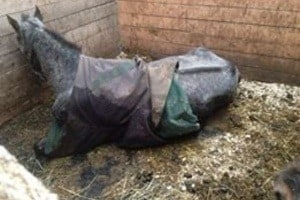 Pepper died two days after investigators took photos of the horses at Breighmara Equestrian, but failed to take action.