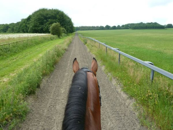 5 Considerations before Filing Equine Lawsuit