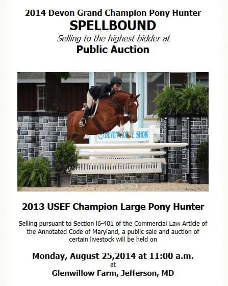 Devon Grand Champion Pony Hunter Spellbound auction by Kim Stewart - will it happen?