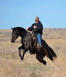 Fist Pump will compete in the working ranch horse class, where he will be asked to use the roping and ranch work skills he will spend the next several months learning at the ranch.