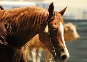 Find out how to get the most out of social media for your horse business