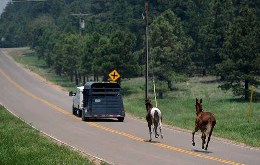 How to Prepare Your Horses when Wildfires Strike