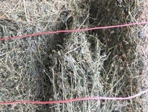 The North Carolina Department of Agriculture and Consumer Services confirms the bales from the tainted load were bound with a reddish-orange twine. Murphy Farm Hay and Feed sold much of the hay at retail.