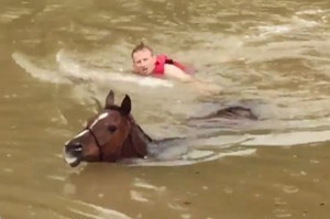 Horse hero Justin Nelzen swims next to a horse he is bringing to shore during Houston's flooding.