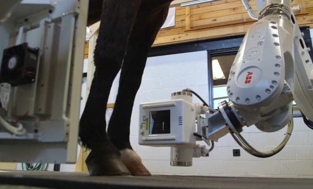 Equimaging Scanner for Horses