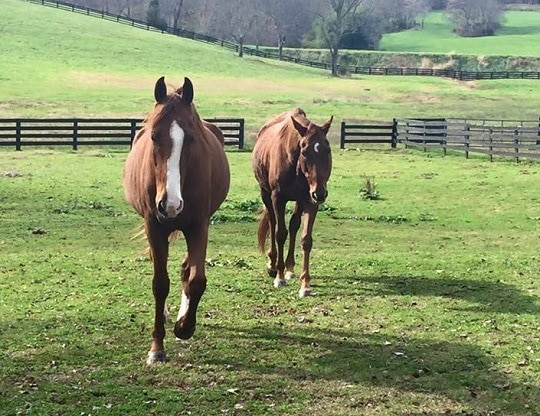 Charged with Animal Cruelty Virginia Horse Rescuer Released on $75K Bond