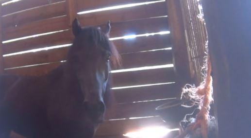 Authorities Raid 3 Horse-Slaughter Facilities near Wellington