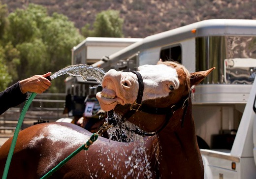 Civil Suit Filed in Reining Horse's Death