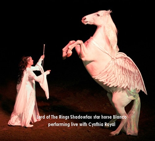 'Lord of the Rings' Horse Shadowfax Dead