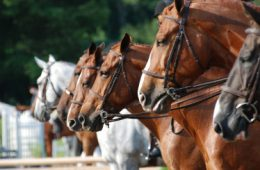 Horse Consignment Agreement