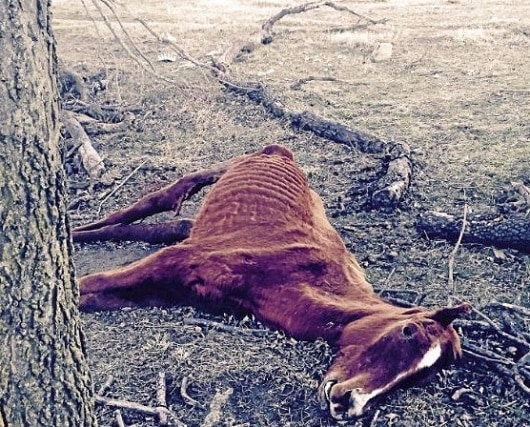 Former AQHA Breeder Charged with Neglect in Oklahoma