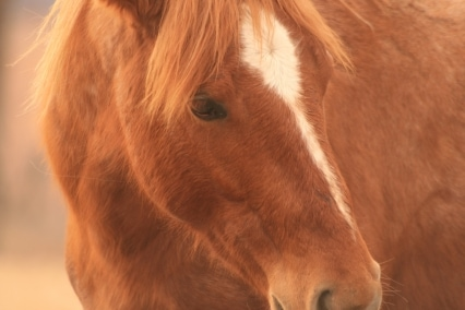Equine Nonprofits and Everyday Giving