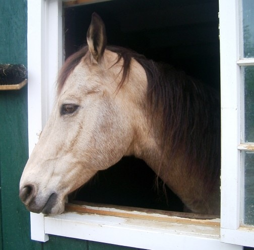 FDA: Equine Ulcer Product Marketing Leads to Warnings for Horse Companies