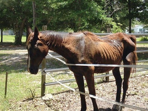 Self-Proclaimed Horse Trainer Charged with Animal Cruelty in Florida