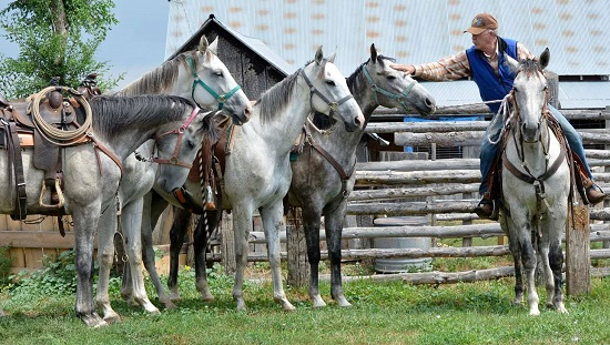 Training Creates Value for Off-Track Thoroughbreds