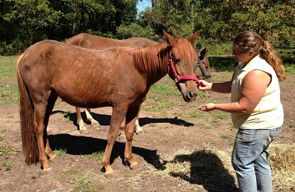 Charges Filed Against Long Time NY Horse Breeder