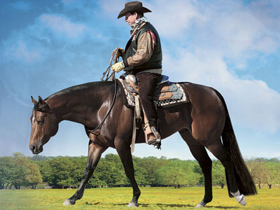 Crundwell Auction: Horses Bring Millions to Dixon