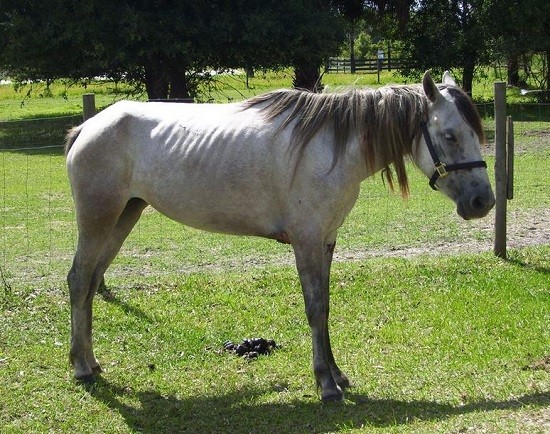Florida Trail Riding Operator Arrested for Animal Cruelty
