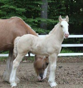 Fairy Tail Equines' Owners Charged with Animal Cruelty