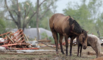 34 Horses Survive Oklahoma Tornado at Orr Family Farm