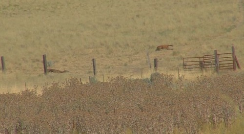 Court Documents: Dead Utah Horses Unchecked for 9 Days