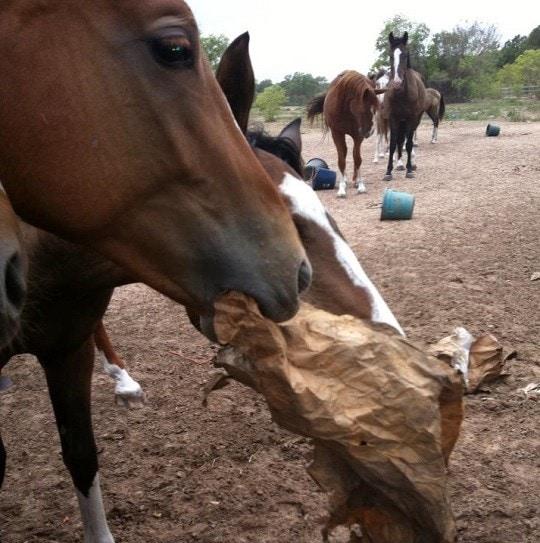 Texas Veterinarian Accused of Animal Cruelty