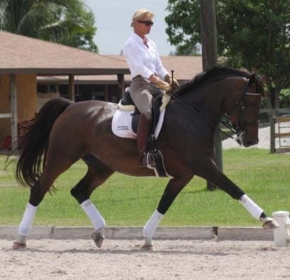 Dressage Trainer Sues for Alleged Non-Payment of $177K Commission