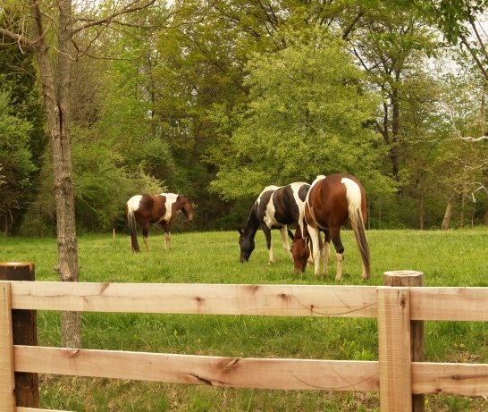 Study: Diagnosing Lyme Disease in Horses is Difficult