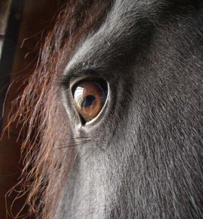 Massachusetts Toughens Penalties for Animal Abusers