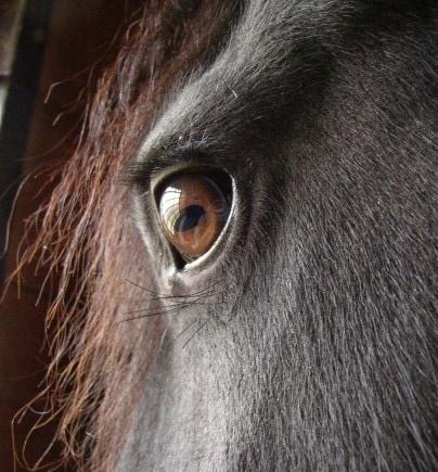 Illinois Horse EIA