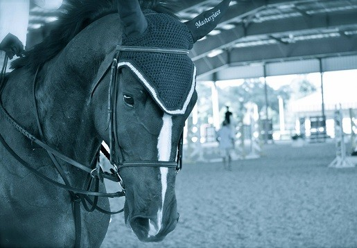 My Horse is Not a Chattel