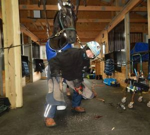 Monica Thors horse torture