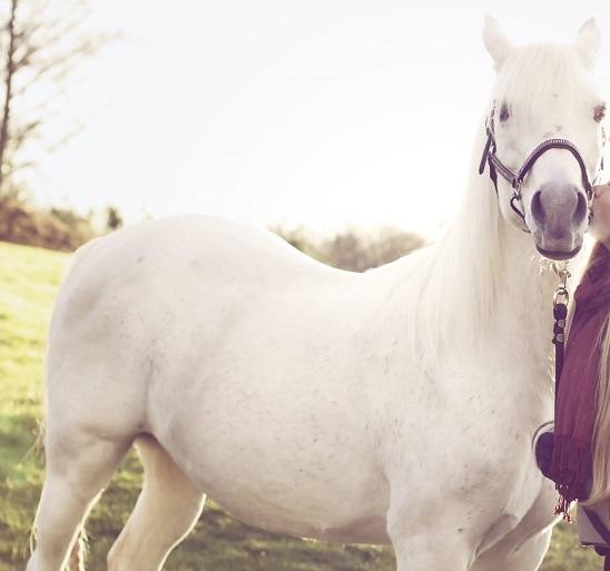 Arabian Trainer Sentenced for Horse Beating