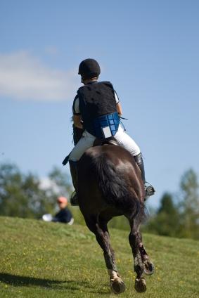 Eriksson v. Nunnink: Lessons for Equine Professionals