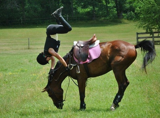 Horses being Horses: 6 Considerations after a Riding Accident