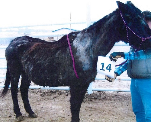 Rocky Acres Rescue and Sanctuary Operators Face Animal Cruelty Charges