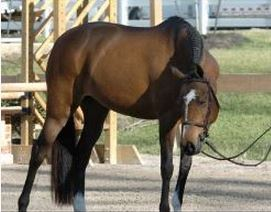 Tennessee Hunter/Jumper Trainer Arrested for Alleged Pony Theft