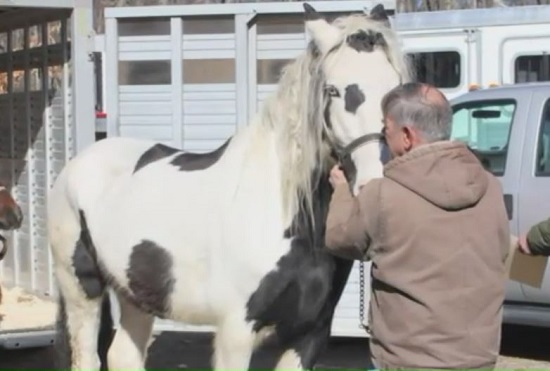 Connecticut Judge Awards Department of Ag 32 Seized Horses
